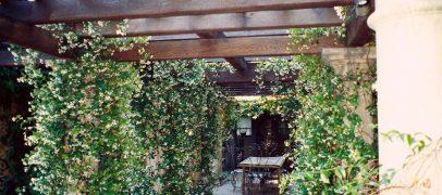 Перголы из дерева для дачи и сада