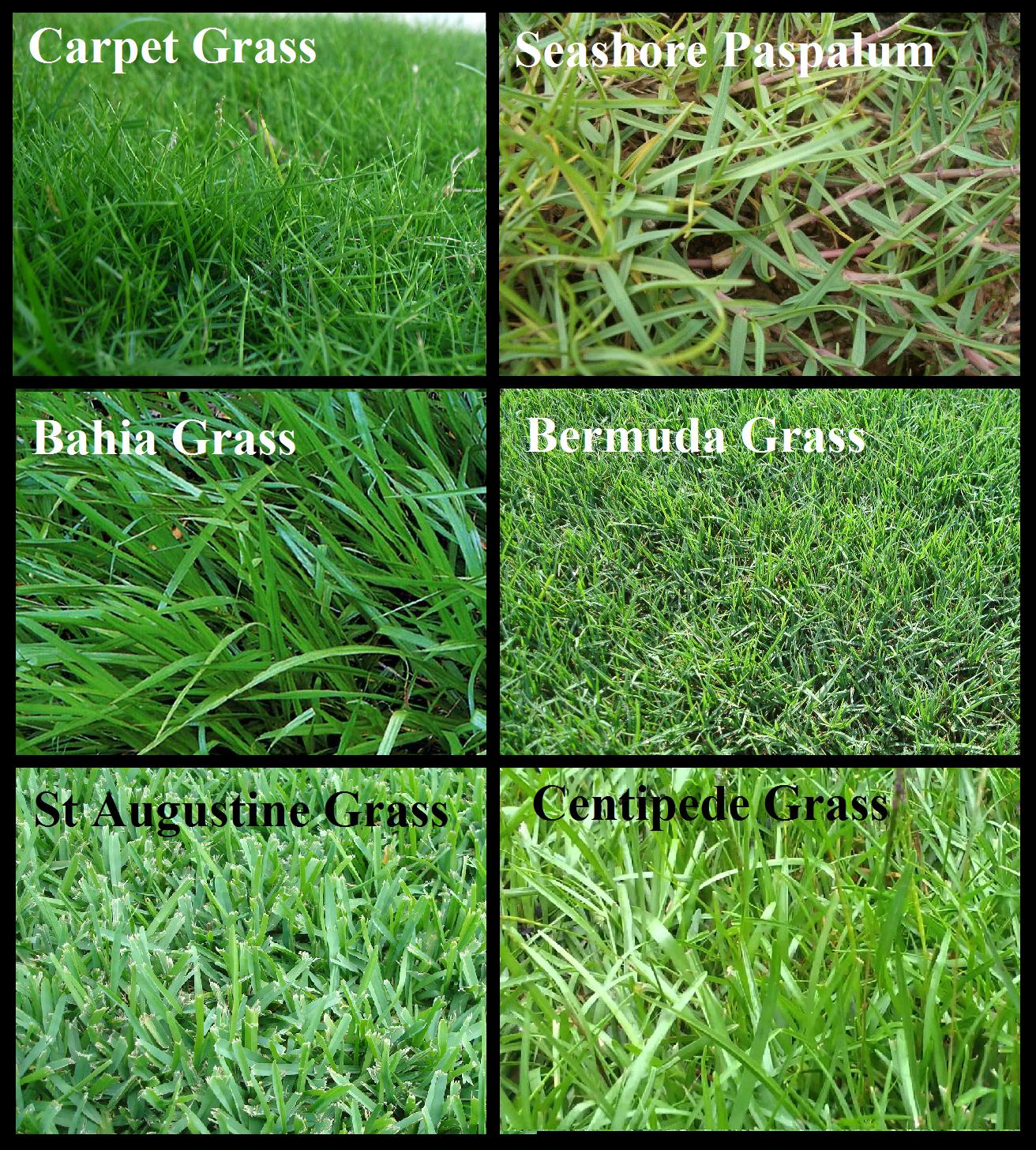 types of grasses The right type of grass will not only beautify your lawn but also be durable and well-adapted to your region if you're a resident of memphis, tennessee or another neighboring area, and are looking for the most popular types of grass available, look no further.