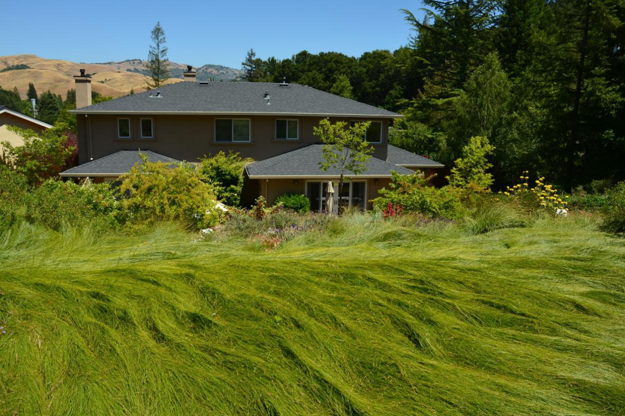 norcal-lawns-17.jpg.rend.hgtvcom.1280.853