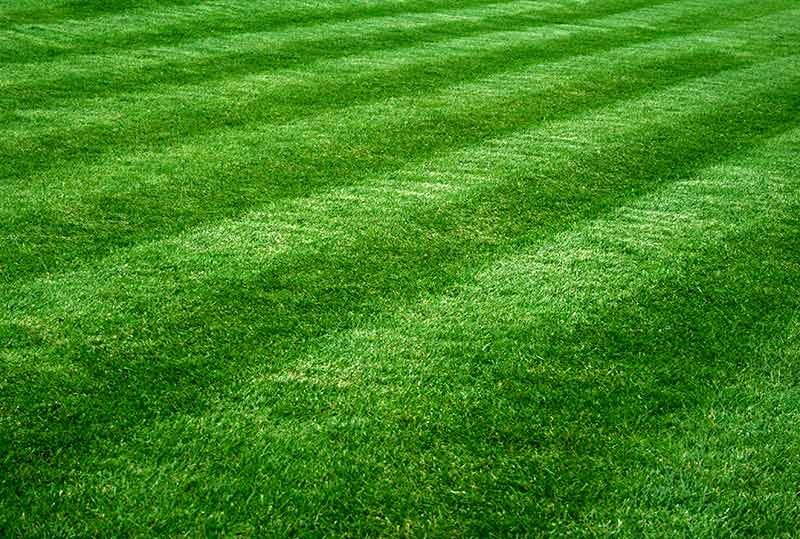 greengrass_lawnmowing